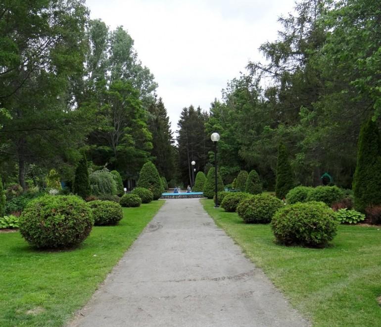 Travaux d'abattage d'arbres au parc Lepage